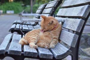 日比谷公園のチャッピー ペロペロ猫