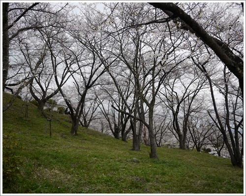 大法師公園8