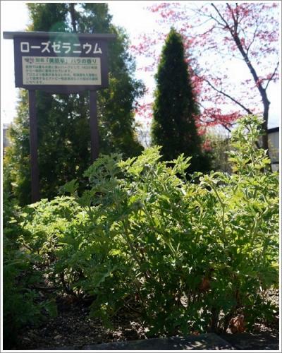 ハーブ庭園9