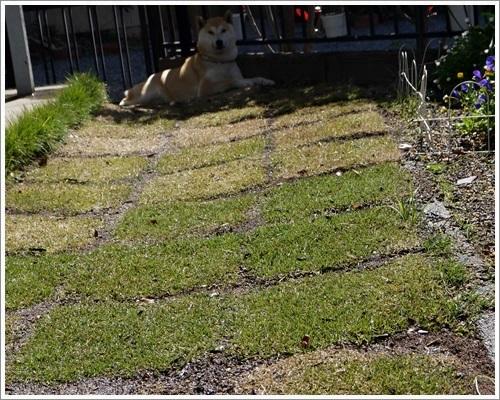 庭の番長4