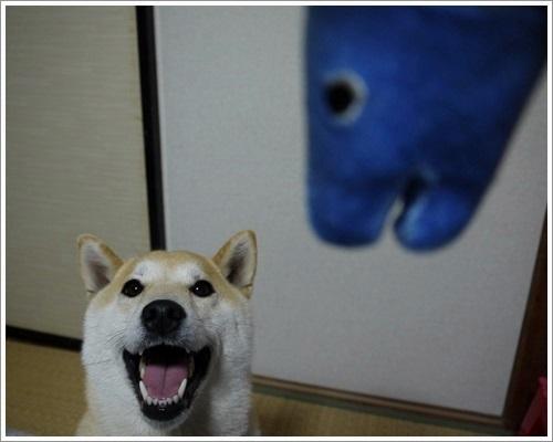新巻鮭とさくら