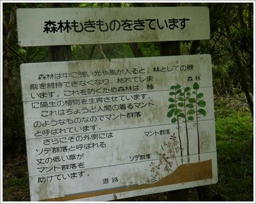 やすらぎの森13