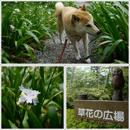 恩賜箱根公園17