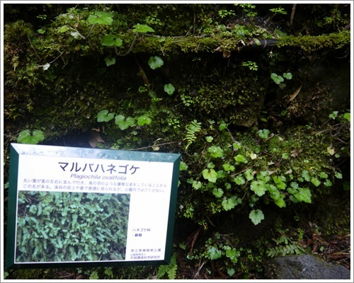 恩賜箱根公園22