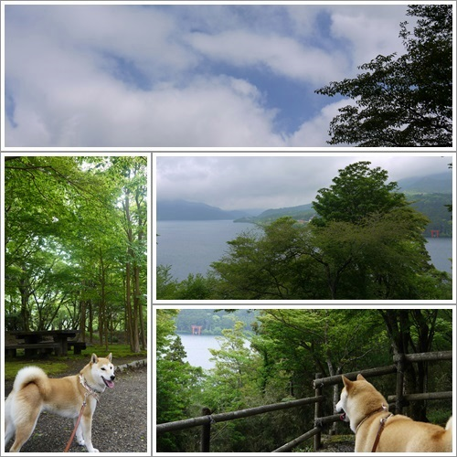 恩賜箱根公園26