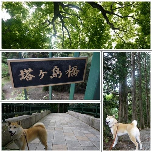 恩賜箱根公園27