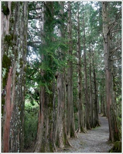 恩賜箱根公園28