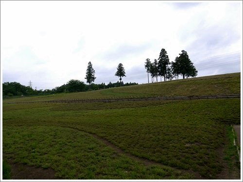 羊山公園2