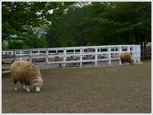 羊山公園3