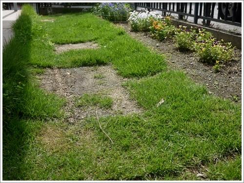 芝刈りと庭の花