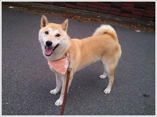 sakura散歩