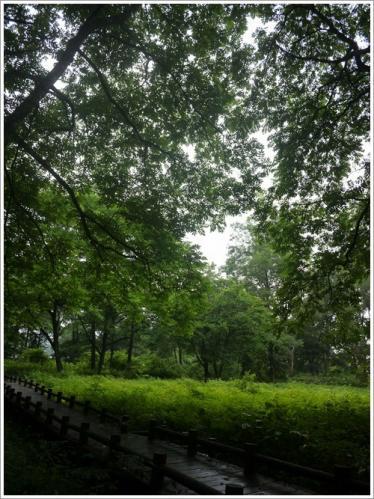姫川源流・親海湿原13