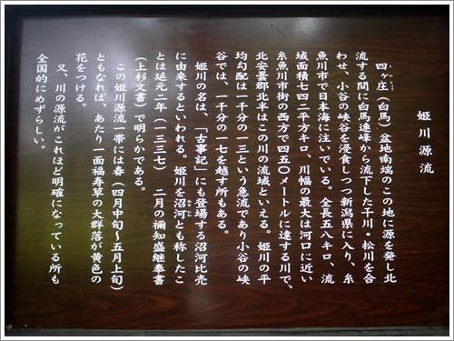 姫川源流・親海湿原21
