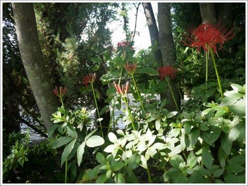 ハーブ庭園11