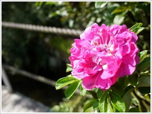 ハーブ庭園14