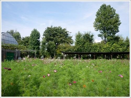 ハーブ庭園26