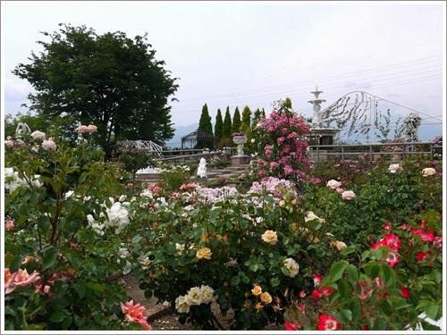 ハーブ庭園 5月 7