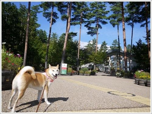 国営アルプスあづみの公園(堀金・穂高地区)散策 その1