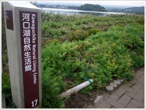 大石公園7