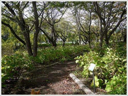 八木崎公園11