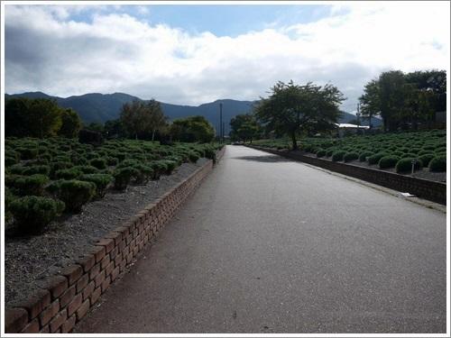 八木崎公園16