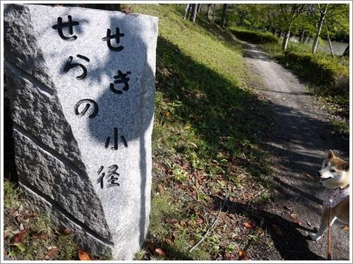 矢木羽湖・運動公園ぐるっと1周散歩