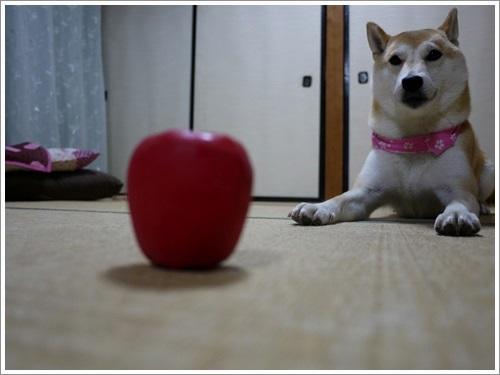りんごのおもちゃとさくら (動画)