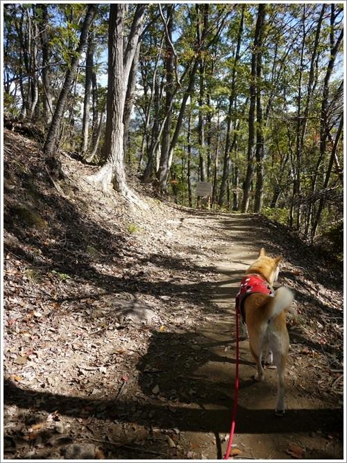 久々の里山散歩 その2 (景色と秋を楽しむ)