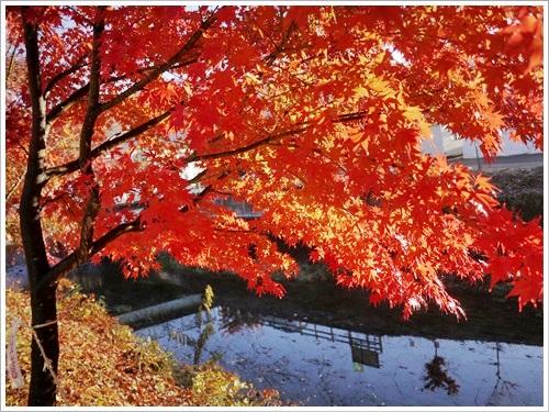 河口湖紅葉祭り42