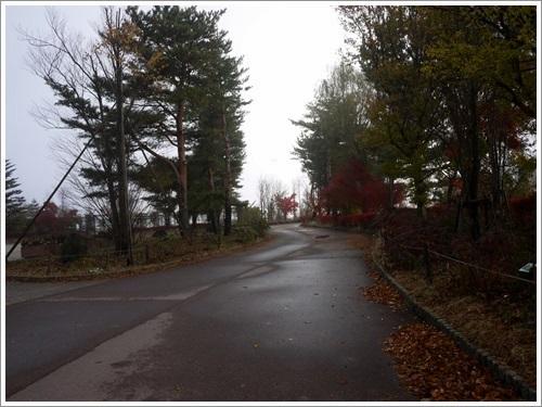 ちょこっと散策 八木崎公園と野鳥の森公園 (写真のみ)