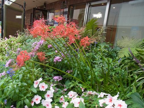 ノイフランク前の花壇
