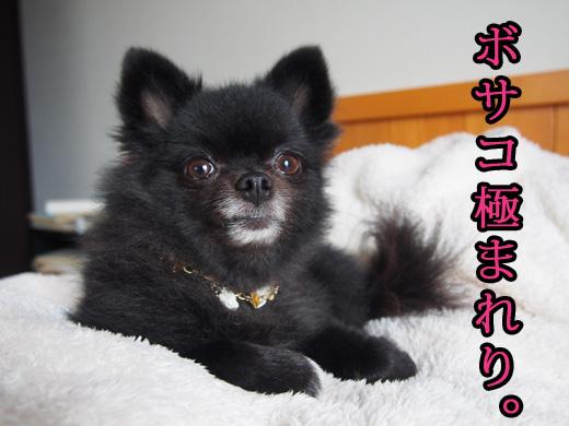 bosakokiwamareri.jpg