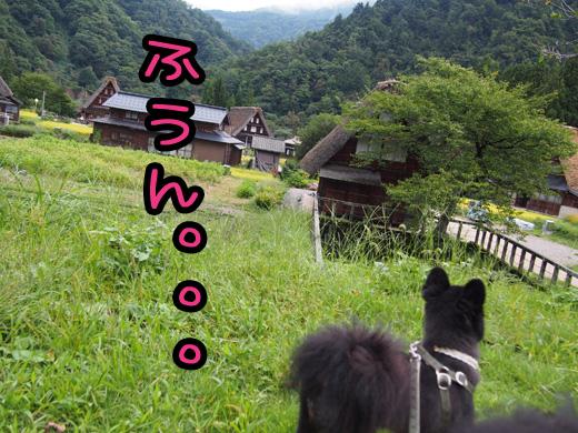 gokayama02.jpg