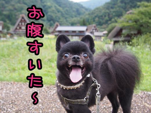 gokayamamaru.jpg