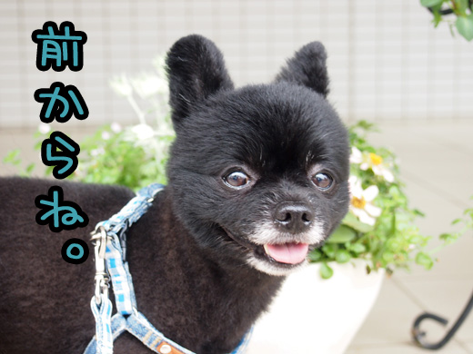 maekaraiouto.jpg
