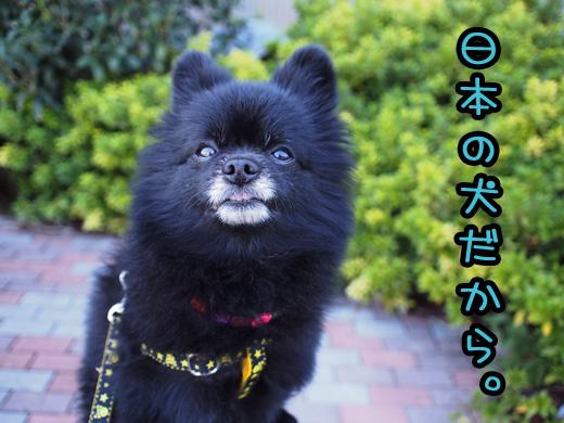 sakenoaragasuki.jpg