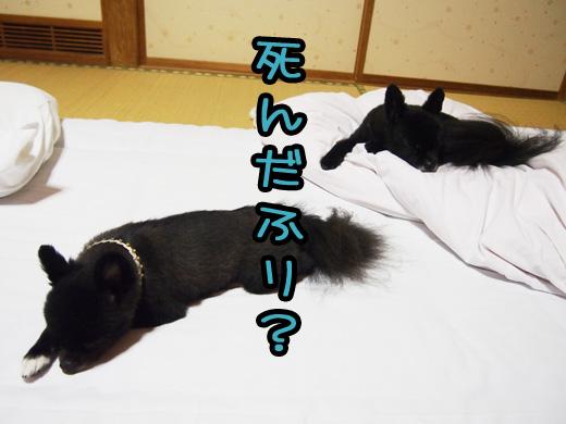 sindafuri_20130929122914233.jpg