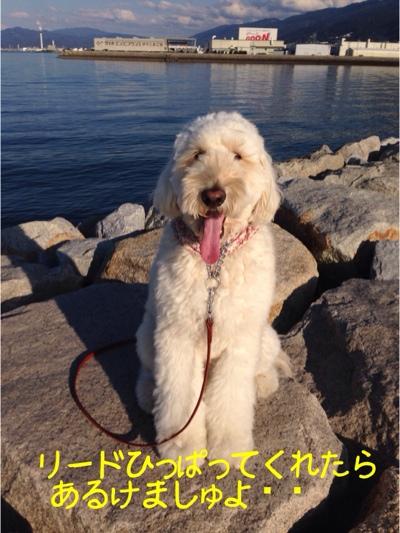 fc2blog_201311191638172f7.jpg