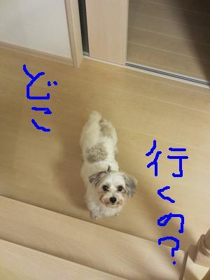IMG_2277.jpg