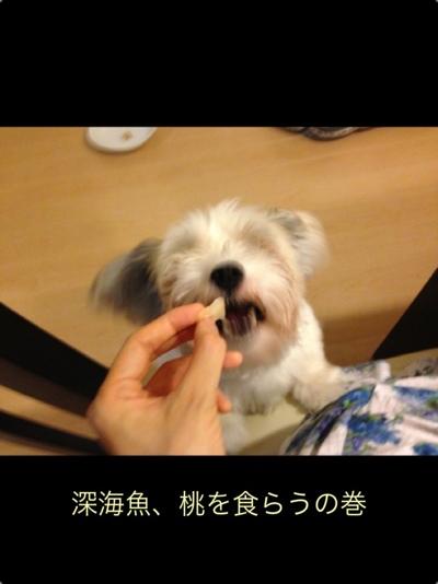 fc2blog_20130802194140cb6.jpg