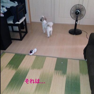 fc2blog_2013090308263709e.jpg