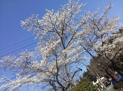 道の駅 那須高原友愛の森①