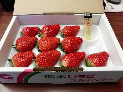 新品種いちご<スカイベリー>栽培マニュアル6月策定へ①