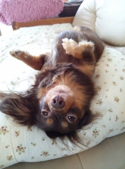 ホラ~犬①