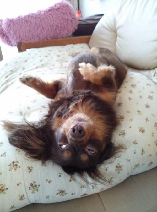 ホラ~犬②