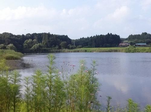 <羽田沼野鳥公園>に、寄り道②