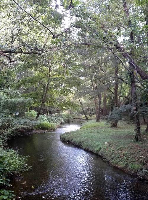 <磯川緑地公園>ちょいと散策①