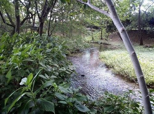 <磯川緑地公園>ちょいと散策⑦