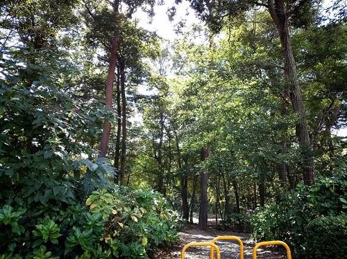 <磯川緑地公園>ちょいと散策⑨
