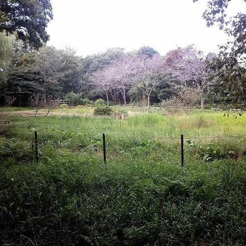 <磯川緑地公園>ちょいと散策⑩
